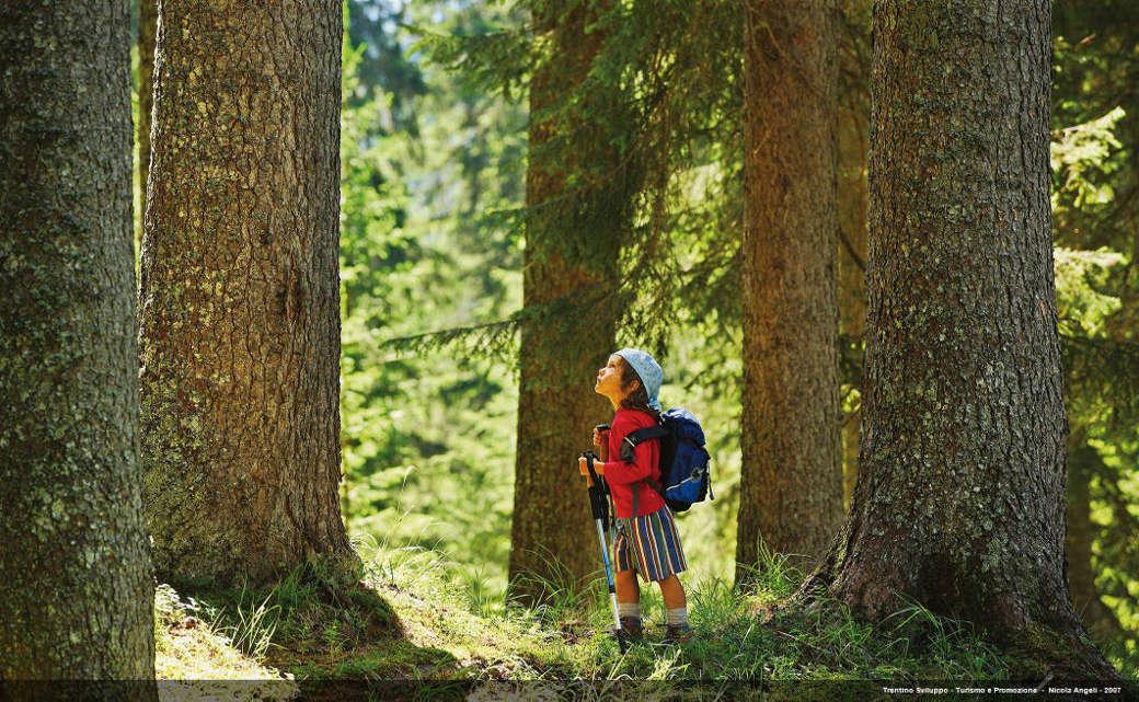 Danni senza precedenti per il famoso bosco che accoglie gli alberi utilizzati da Stradivari